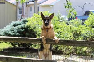 Clôture pour chien