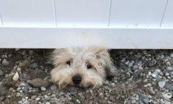 Clôture pour chien moyen