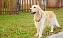 Clôture pour gros chien
